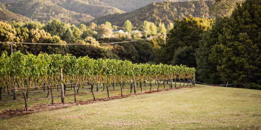 Te Whai Bay Wines